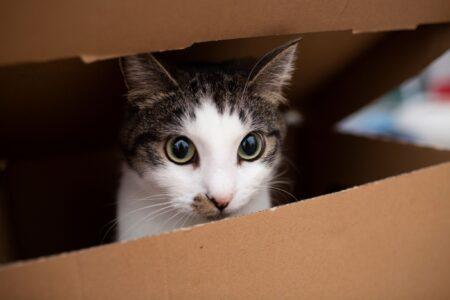 Waar moet je op letten als je een kat wil?