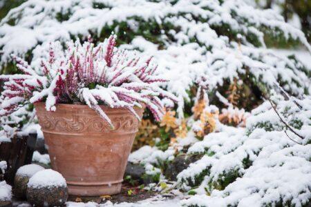 Buitenplanten tegen de vorst beschermen? Zo doe je dat
