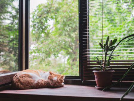 Is het beter om met een raam open te slapen?