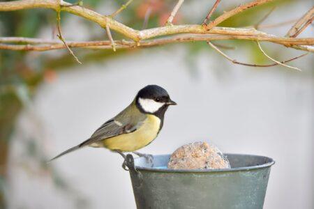 Hoe krijg je een vogelvriendelijke tuin?