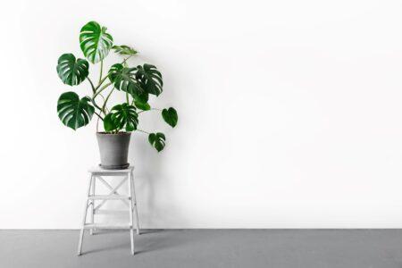 Welke 10 kamerplanten hebben weinig zonlicht nodig?