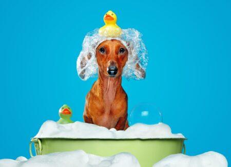 Waar moet je op letten wanneer je je hond in bad doet?