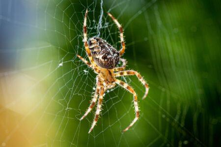 Ben je ook bang van spinnen? Dit is waarom