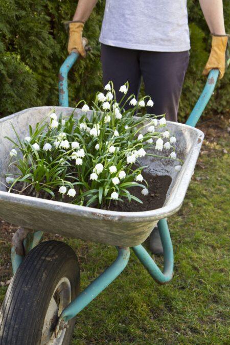 Tuinkalender; wat kan je in maart in de tuin doen?